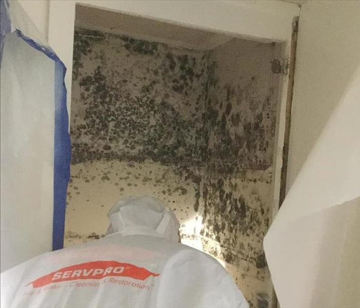 Mold growth due to rain.