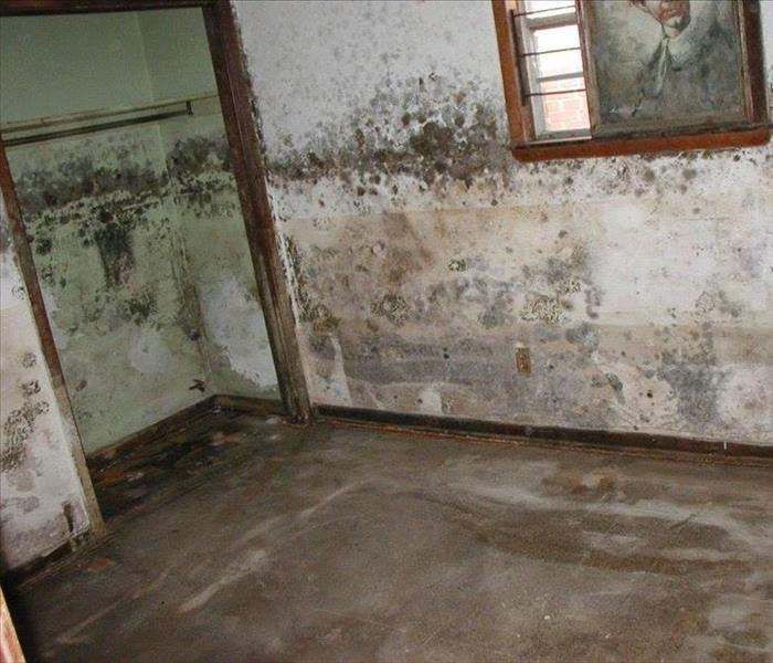 Mold Can Endanger Your Health...