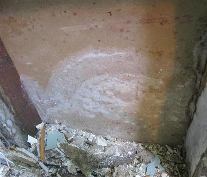 Mold Remediation Long Beach Residents:  Follow These Mold Safety Tips If You Suspect Mold